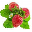Some fresh strawberry isolated on white background — Stock Photo