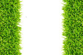 Frame of lawn grass — Stock Photo