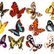 Set of realistic butterflies — Stock Photo #28455269