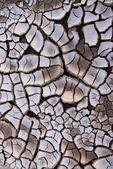 Dry cracked earth texture — 图库照片