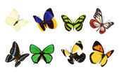 Set of realistic butterflies — Stock Photo