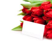 красивые тюльпаны — Стоковое фото