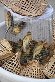 Birds in the cage — Stock Photo