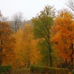 Orange autumn maple leaf alley — Stock Photo