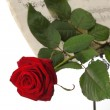 Red rose and old notes Sheet music - Stock Photo