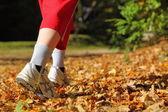 çapraz ülke iz sonbahar ormanda yürüyen kadın — Stok fotoğraf