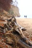 Autumn cliff in Orlowo, Gdynia Poland — Stock Photo