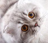 Cat Waiting Miracle — Stock Photo