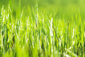 Green grass with drops — Stock Photo