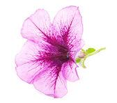 Красивый цветок крупным планом — Стоковое фото