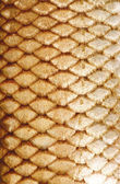 Texture of fish scales — Stock Photo