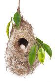 Bird nest — Stock Photo