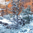 Zion park - Stock Photo