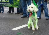 Chicago Saint Patrick parade — Stock Photo