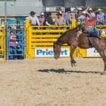 Helldorado days rodeo — Stock Photo #27901013