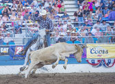 Rodeo de reno — Foto de Stock