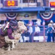 Foto de Stock  : Reno Rodeo