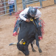 Stock Photo: Gallup, IndiRodeo