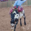 Gallup, Indian Rodeo — Stockfoto