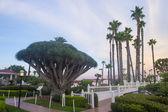 Hotel Del Coronado — Stockfoto