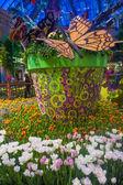 белладжо консерватории & ботанический сад — Стоковое фото