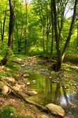 Creek in the woods in the spring — Stock Photo