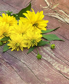 Flowers of yellow color — Stock Photo