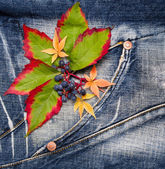 Autumn leaves with of grapes on a jeans background — Stock Photo