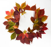 Autumn time: red vine leaves and paper text — Stock Photo