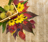 Autumn foliage and an edible chestnuts. — Stock Photo
