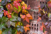 Red autumn leaves on a brick wall — Stock Photo
