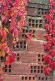 Red leaves on a wall of bricks — Stock fotografie