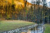 Strumyk w lesie — Zdjęcie stockowe