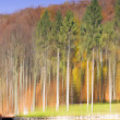 Abstract image of trees in autumn forest. — Stock Photo #36648925