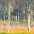 Abstract image of trees in autumn forest. — Stock Photo #36648929