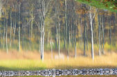 Abstract image of trees in an autumn forest. — Stock Photo