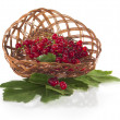 Stock Photo: Fresh redcurrant in basket