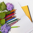 Stock Photo:  Flowers hydrangeas and school subjects.