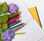 Flowers hydrangeas and school subjects. — Stockfoto