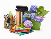Hydrangea flowers and school subjects — Stock Photo