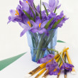 Purple spring crocus flowers. — Stock Photo