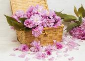 Sakura flowers in a basket  — Stock Photo