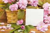 Card with sakura flowers spring — Stock Photo