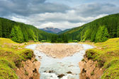 Mountain river surrounded by pine forest. — Stock Photo