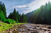 Mountain river in the forest with sunlight. — Stock Photo