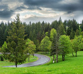 Road through forest .  — Stock Photo