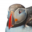 Puffin on white — Stock Photo #18610853