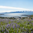 Husavik — Stock Photo