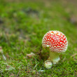 Amanita from above — Stock Photo