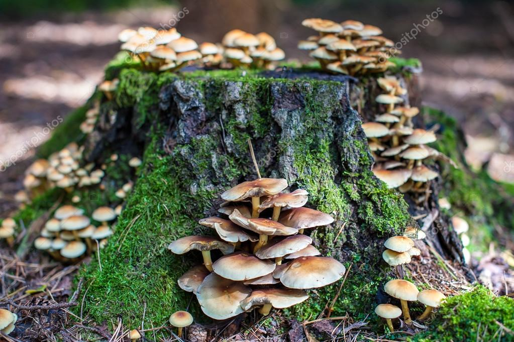 Souche d 39 arbre aux champignons photo 22987402 - Produit destructeur de souche d arbre ...